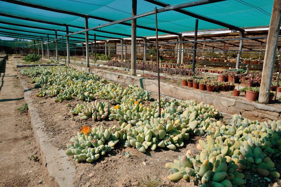 Vanrynsdorp Succulent Nursery