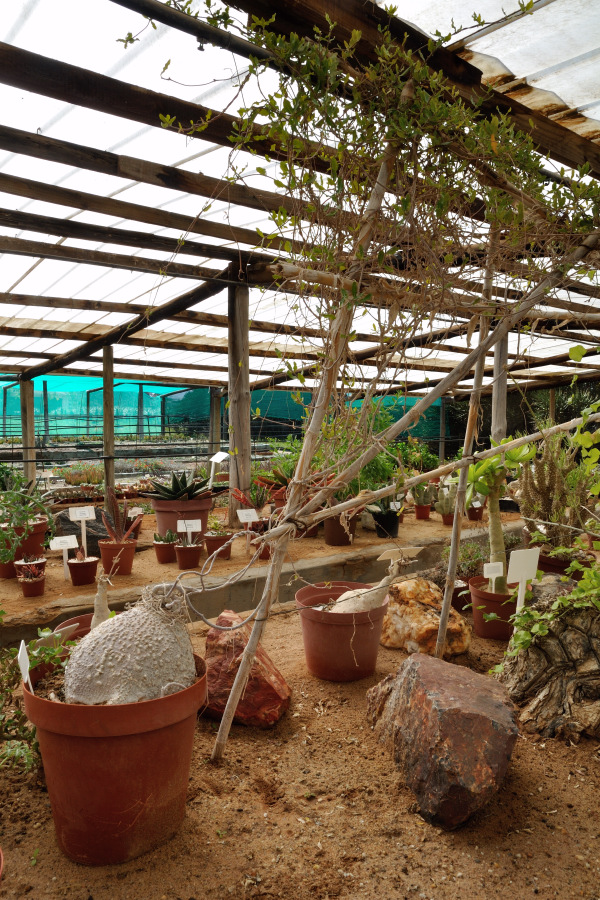 Excursion to a succulent plants nursery in South Africa and pictures