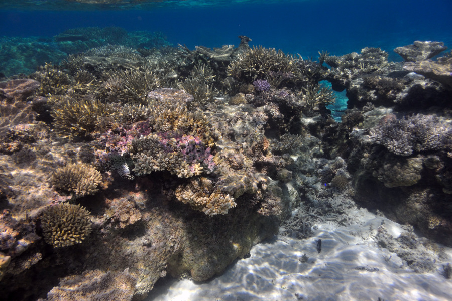 Tonga Coral Reef Around Haapai Islands In South Pacific