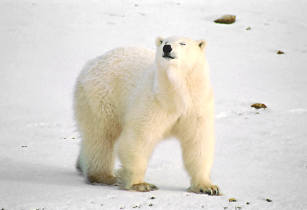 the bay polar guide parka