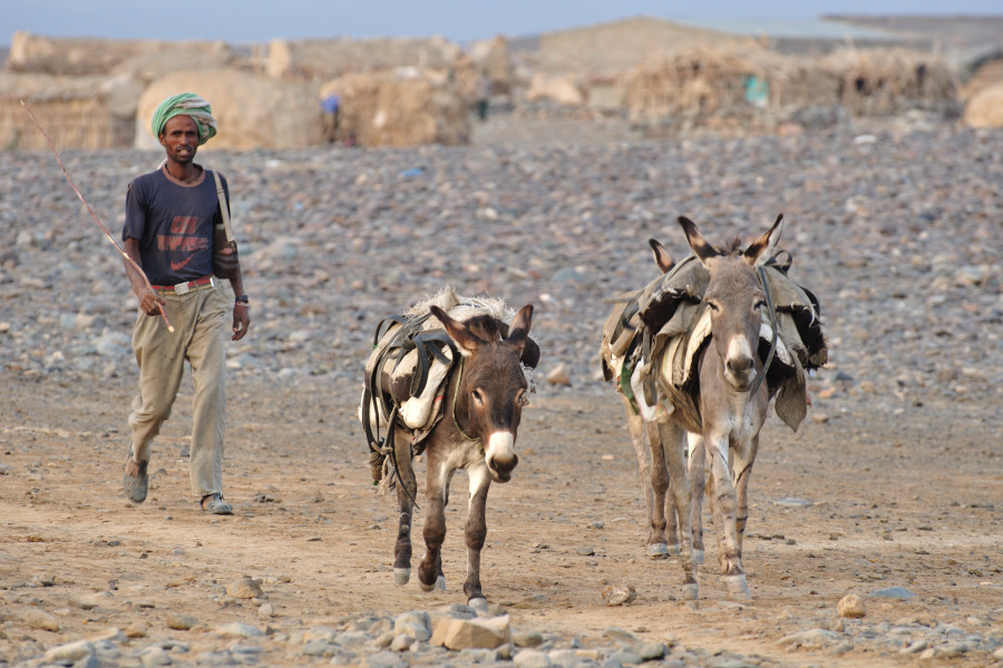 The Donkey and the Load of Salt– Short Story