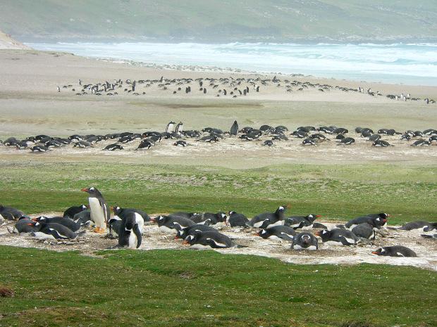 Falklands Travel Guide