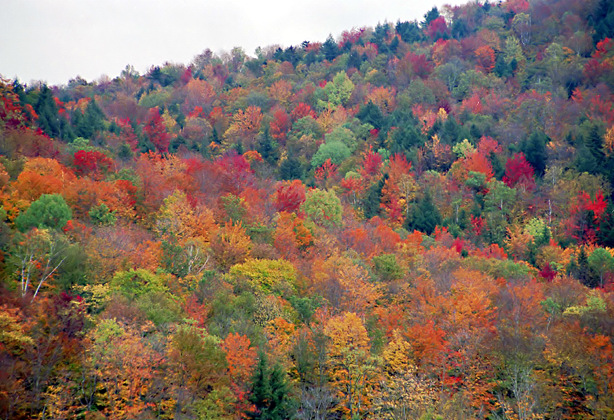 Travel To Vermont By Rented Car For The Fall Foliage