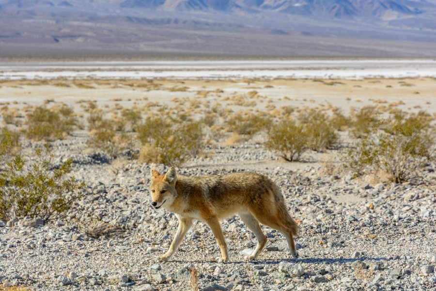 Worth Visiting Or Not Death Valley National Park Forum