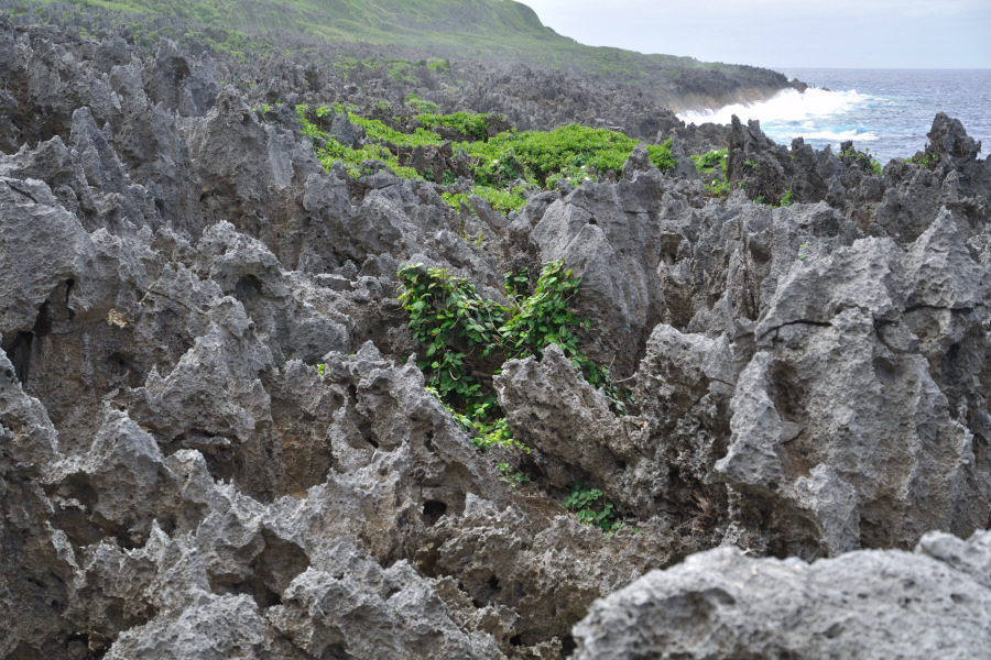 tour in niue to togo chasm through the rainforest and a