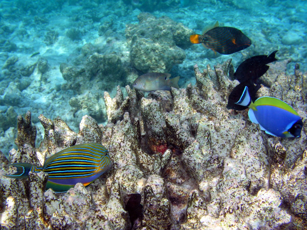 photo guide to fishes of the maldives