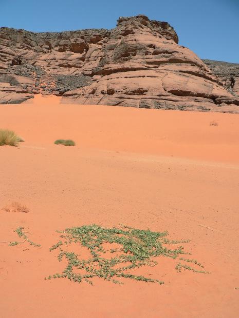 Deserts Sahara Atacama Taklamakan  Crystalinks