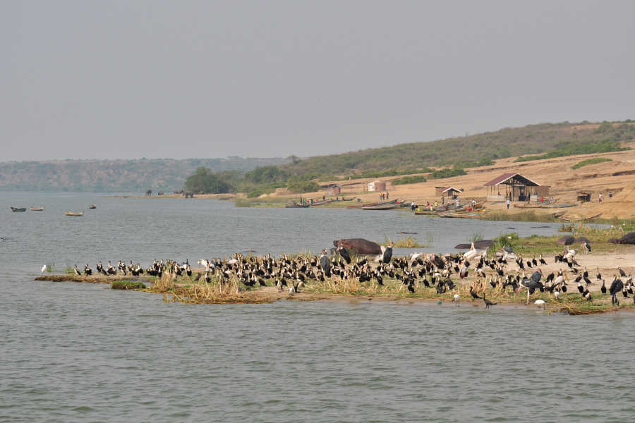 kazinga channel cruise in uganda hippopotamus pictures. Black Bedroom Furniture Sets. Home Design Ideas