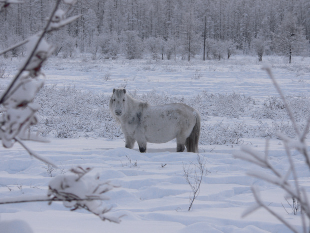 trip to oymyakon in yakutia sakha pictures of siberian winter in russia at the world coldest. Black Bedroom Furniture Sets. Home Design Ideas